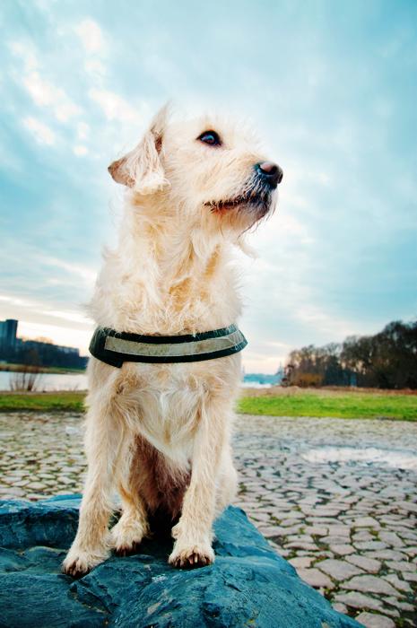 Hundeshooting mit Siska in Dresden an den Elbwiesen
