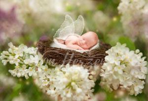 baby_spring