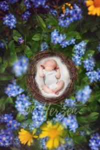 baby_spring4