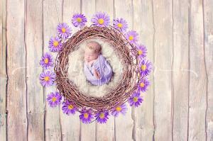 gaensebluemchen baby